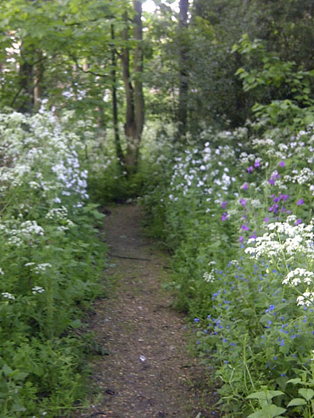 Woodland path with flowers