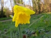First daff opens 2014