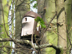 Bird and Bat Boxes