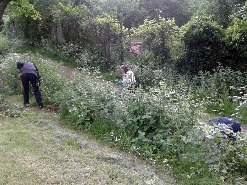 Spring Work Day 2015 – Weeding the Hedge