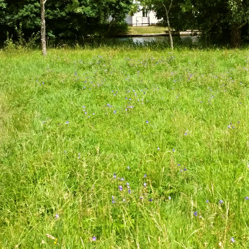 Meadow Update 2017